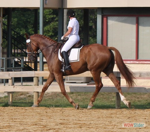 'Q' at PG Equestrian Center