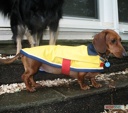 'Frieda' models her rain coat.